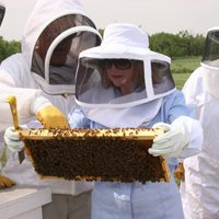 Spiral Horn Beekeeping Workshop @ Spiral Horn Apiary | San Saba | Texas | United States